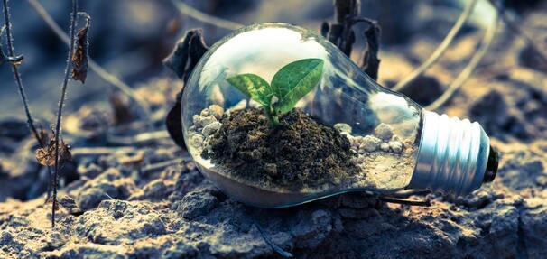 Ekologiczne inwestycje BNP Paribas
