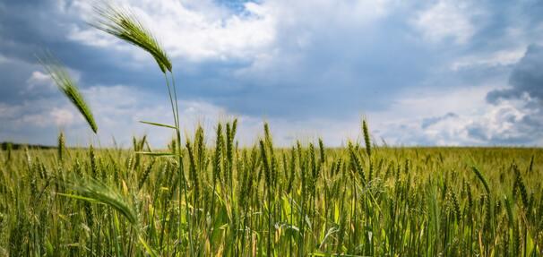 Zmiany w Funduszu Gwarancji Rolnych – BGK zwiększa pomoc dla rolników i przetwórców